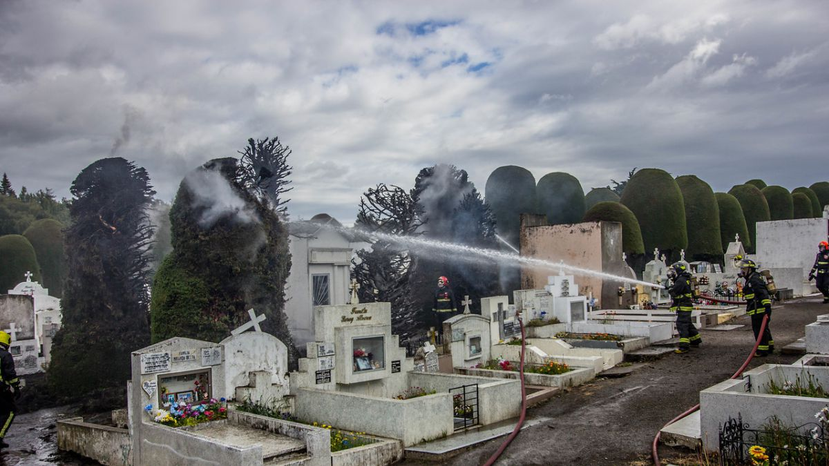 Desconocidos queman intencionalmente cipreses centenarios del Cementerio Municipal de Punta Arenas