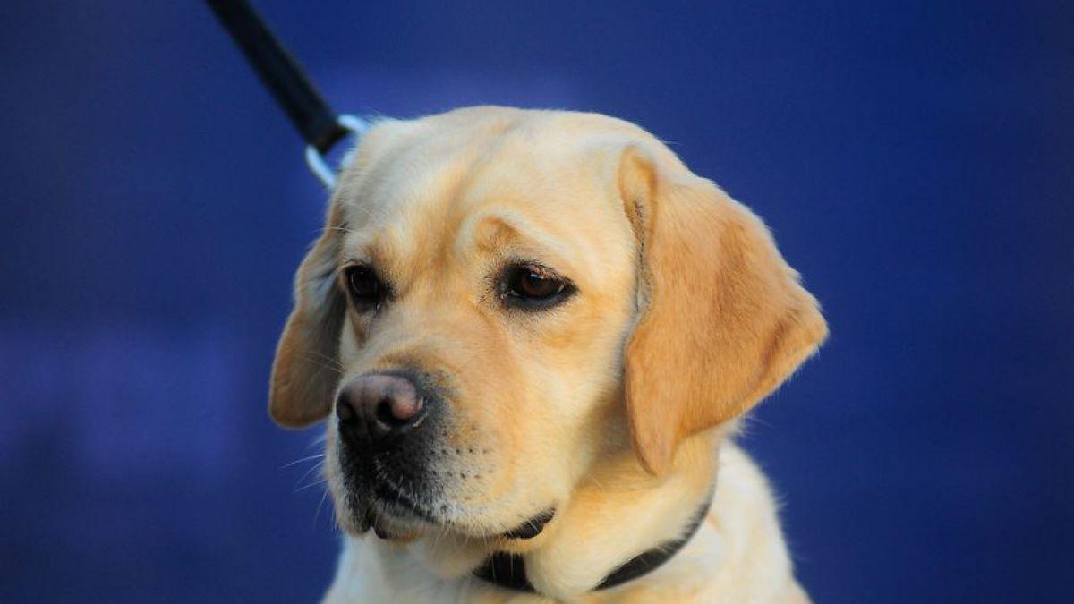 Ley Cholito: desde mañana se podrá inscribir a mascotas | Tele 13