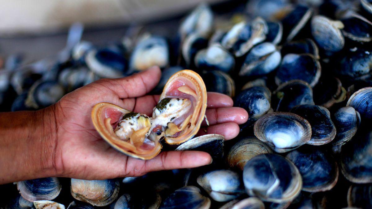 Marea roja: Supermercado pide a sus clientes no consumir almejas frescas