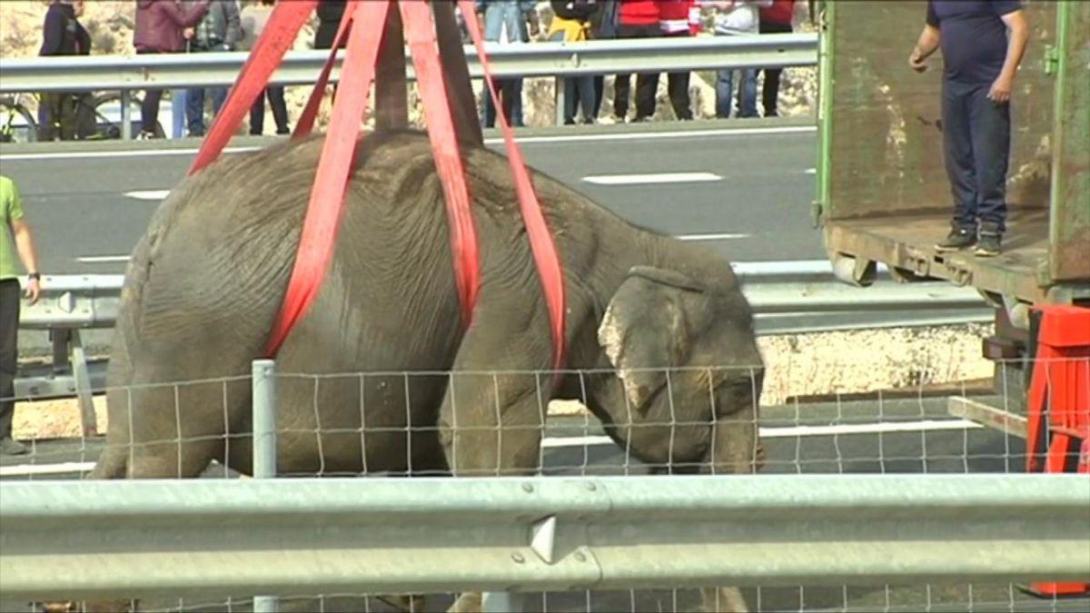 El camión cargado de elefantes que volcó en una autopista de España