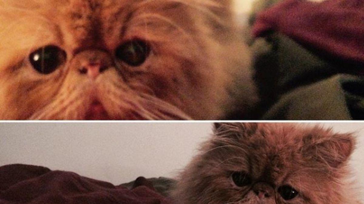 Síndrome del gato volador:  El problema doméstico que afecta a los amantes de los gatos