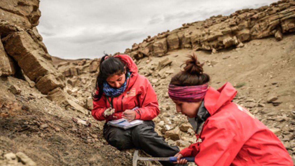 Investigadores descubren nueva especie de dinosaurio en Magallanes