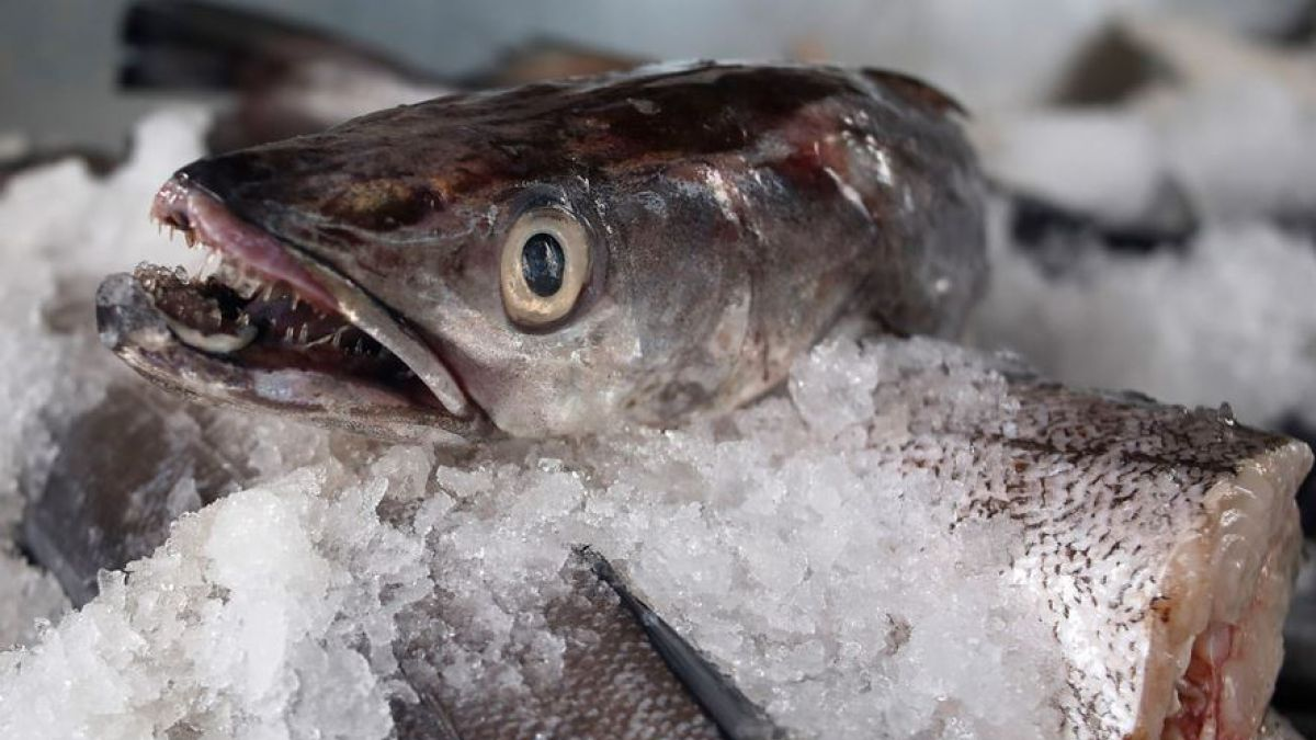 Determinan cuánto Omega 3 contienen los pescados chilenos