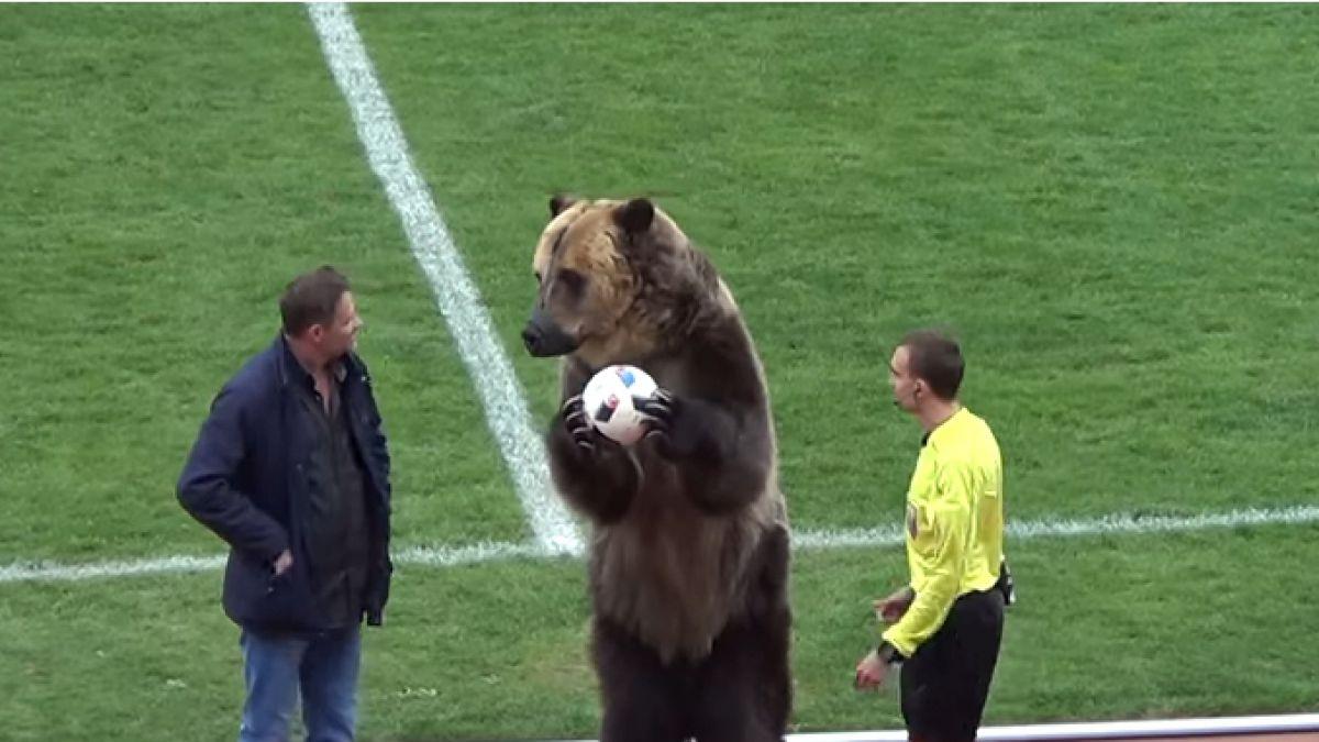 [VIDEO] Polémica por oso que le entregó la pelota a un árbitro en Rusia
