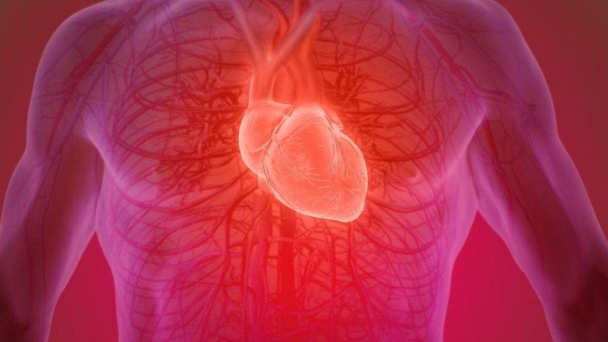 Es posible recuperar un corazón humano después de muerto? | Tele 13