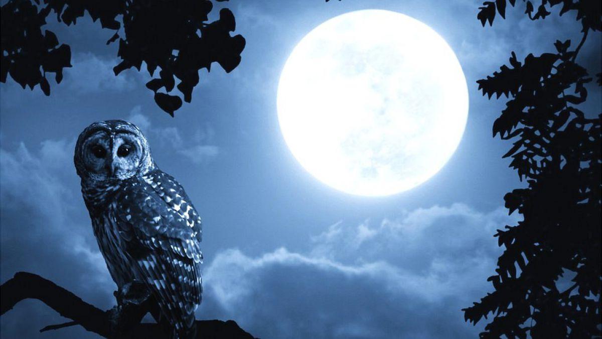 ¿Puede La Luna Llena Afectar La Calidad Del Sueño?