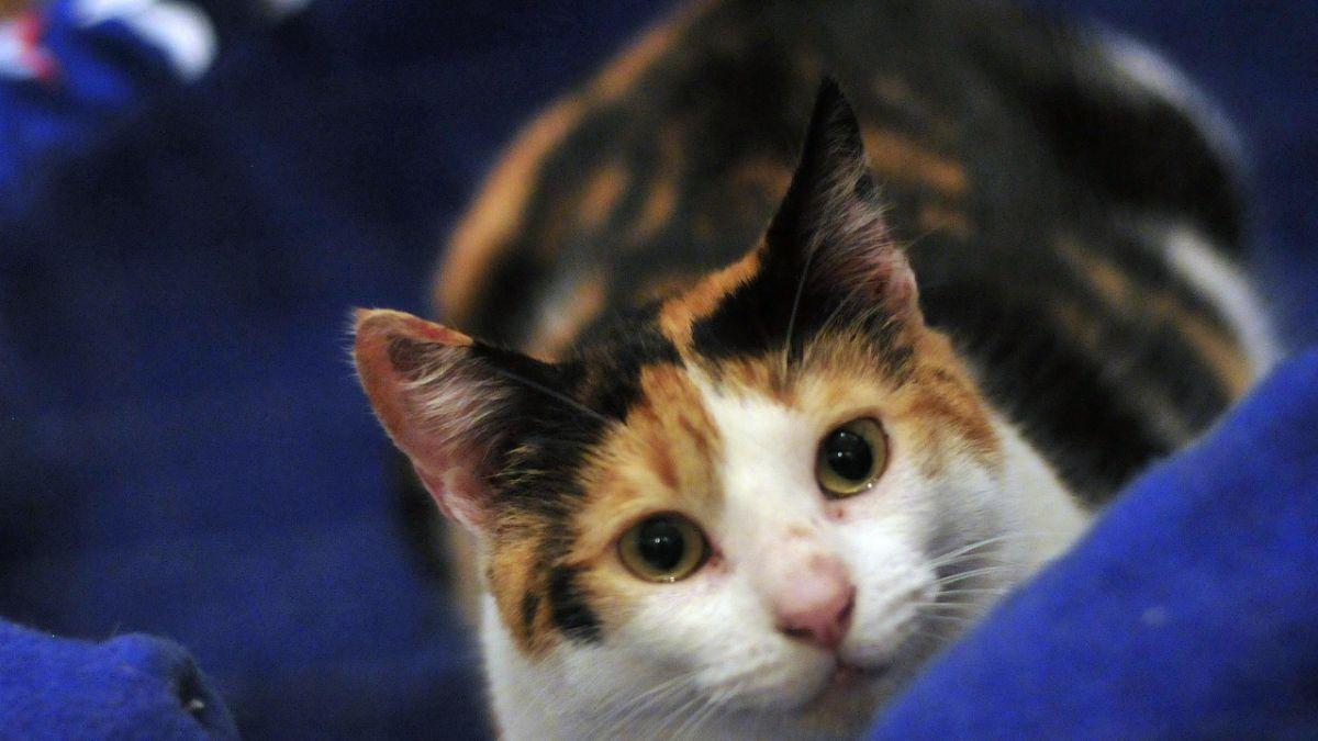 Gato se trepa sobre su dueño en plena entrevista en tv holandesa