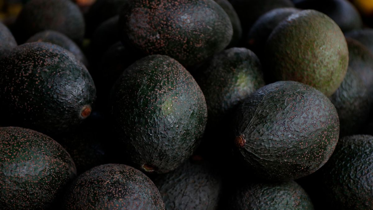 Alternativas económicas a palta hass