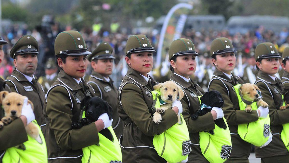 [VIDEO] Los perritos de la Parada Militar tendrán su primer patrullaje policial