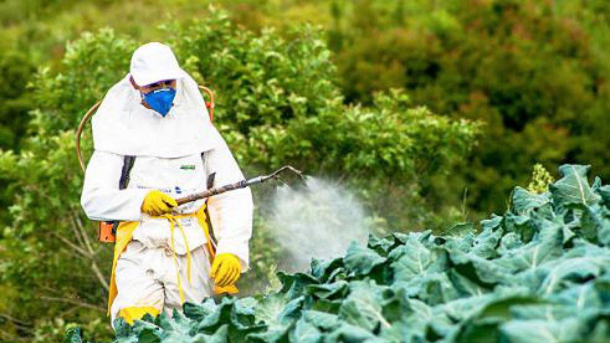 Encuentran presencia de plaguicida prohibido hace 18 años en niños de zonas rurales de Talca