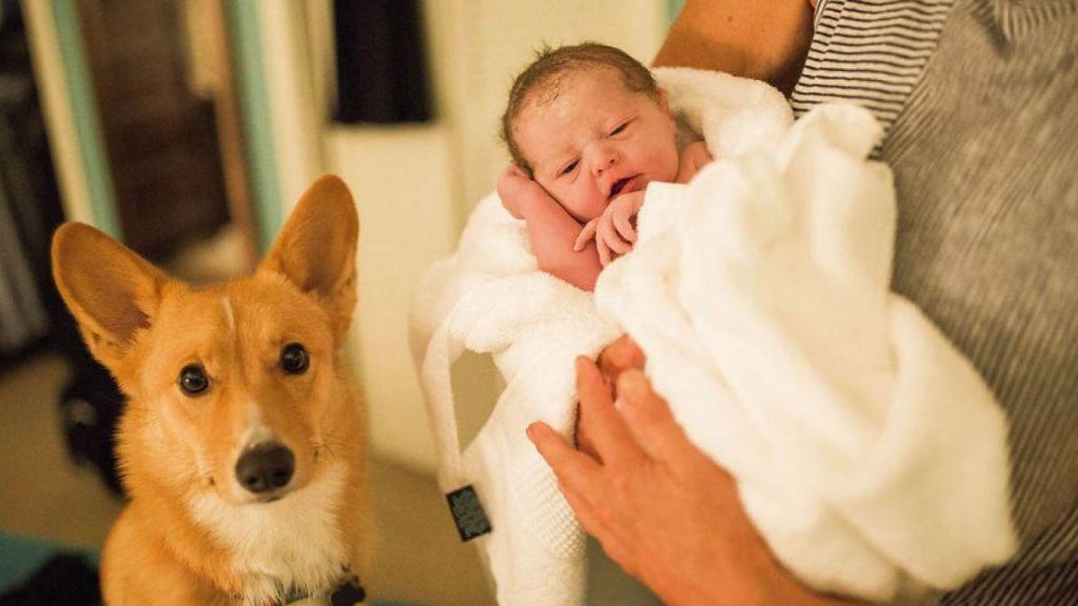 [FOTOS] Mujer dio a luz y no se percató del apoyo de su perro hasta que publicó las fotos