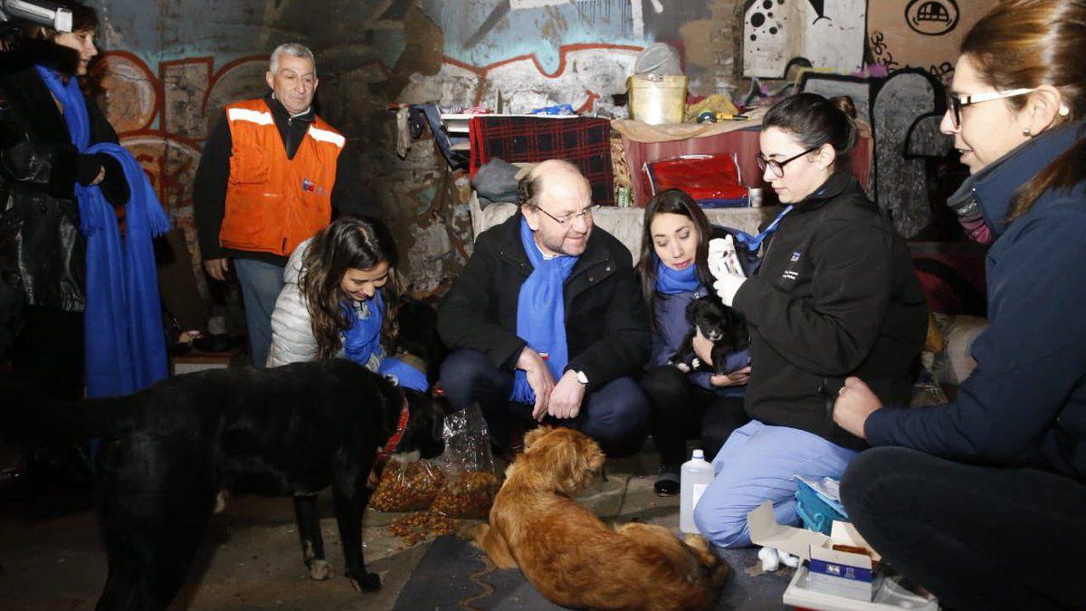 Gobierno anuncia que Código azul contempla ayuda a mascotas de personas en situación de calle