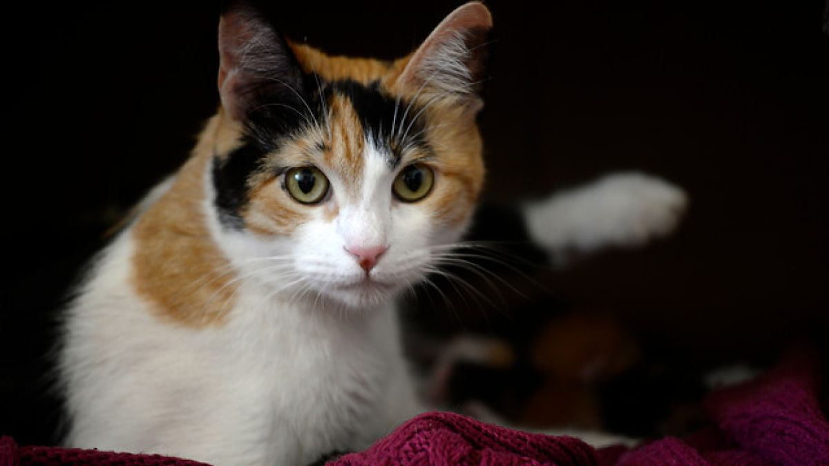 ¿Por qué se dice que agosto es el mes de los gatos?