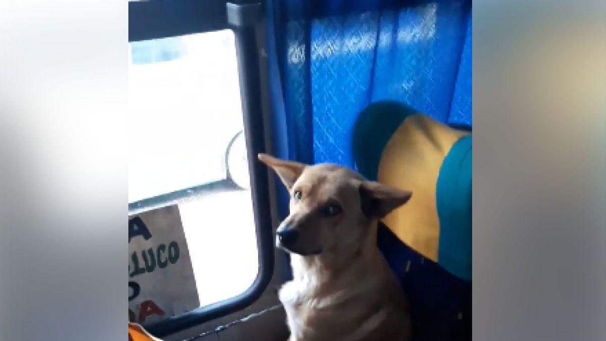 El tierno gesto de un colectivero con un perro de la calle