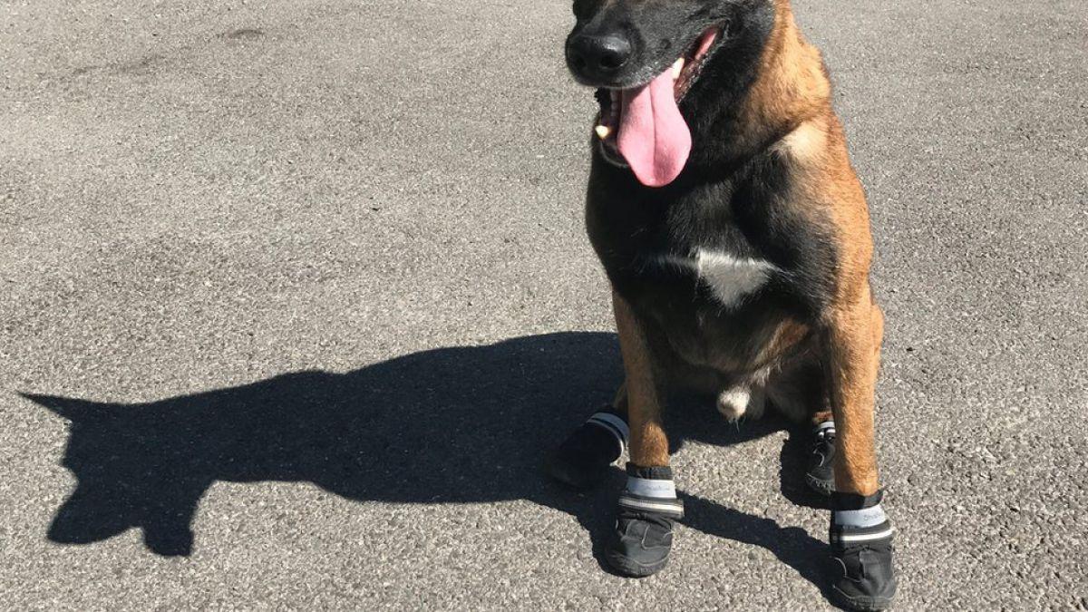Hot Dog: por qué la policía en Suiza está haciendo campaña para que le pongan zapatos a los perros