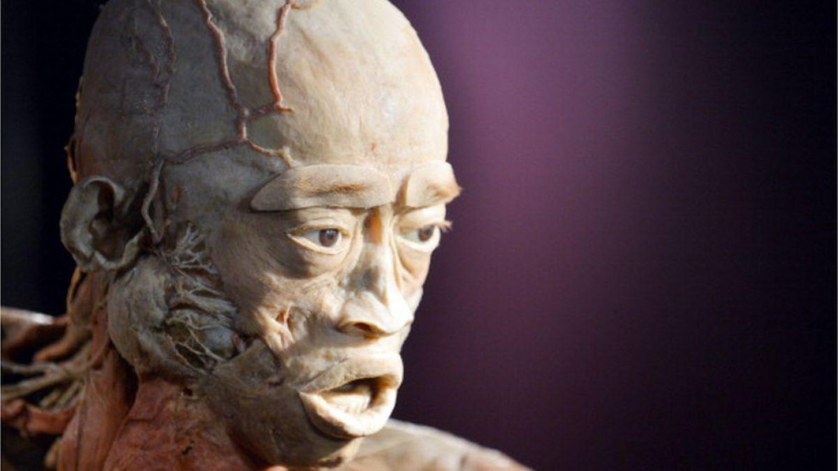 La exhibición de cadáveres plastinados que causa polémica en Reino Unido y Australia
