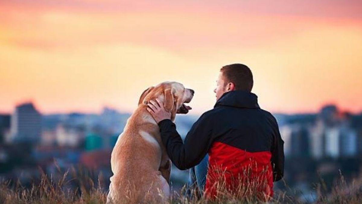 ¿Qué sienten las mascotas antes de morir? Veterinarios revelan la triste verdad