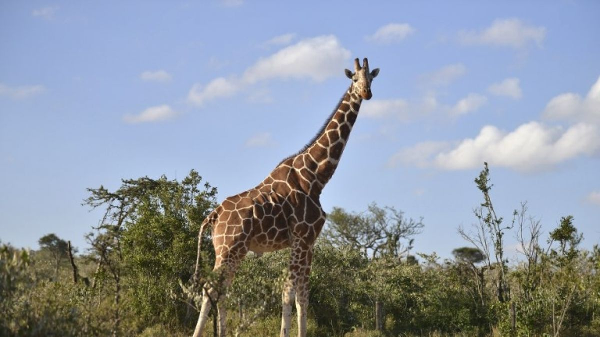 Científica y su hijo luchan por sobrevivir a feroz ataque de jirafa