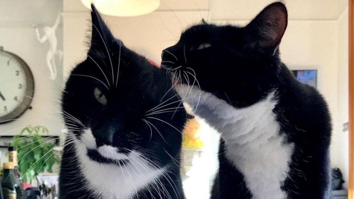La verdadera razón por la que ronronean los gatos