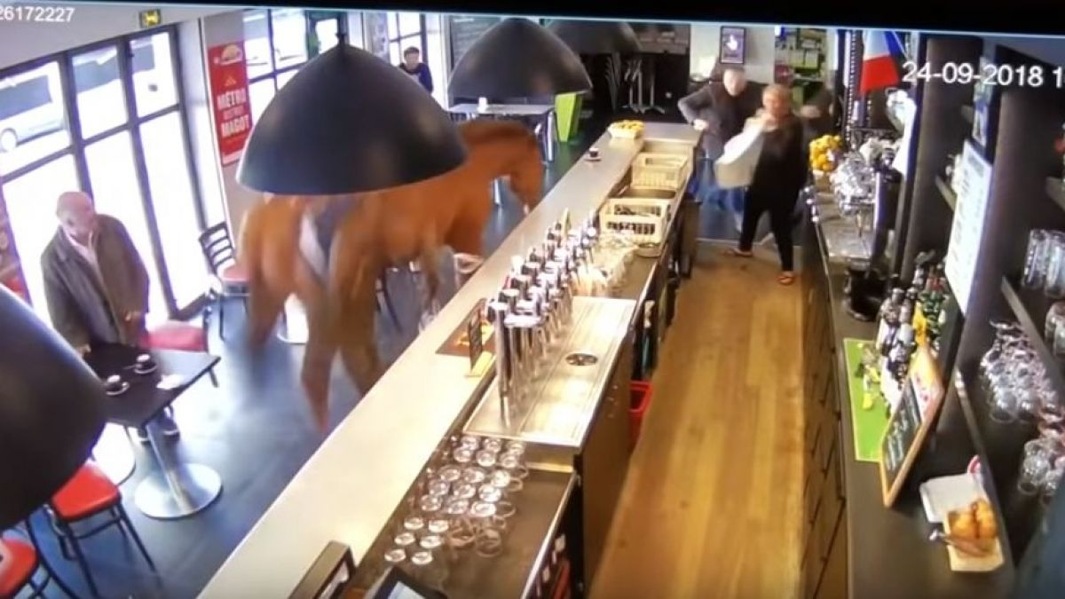 Un caballo irrumpió en una cafetería de Francia