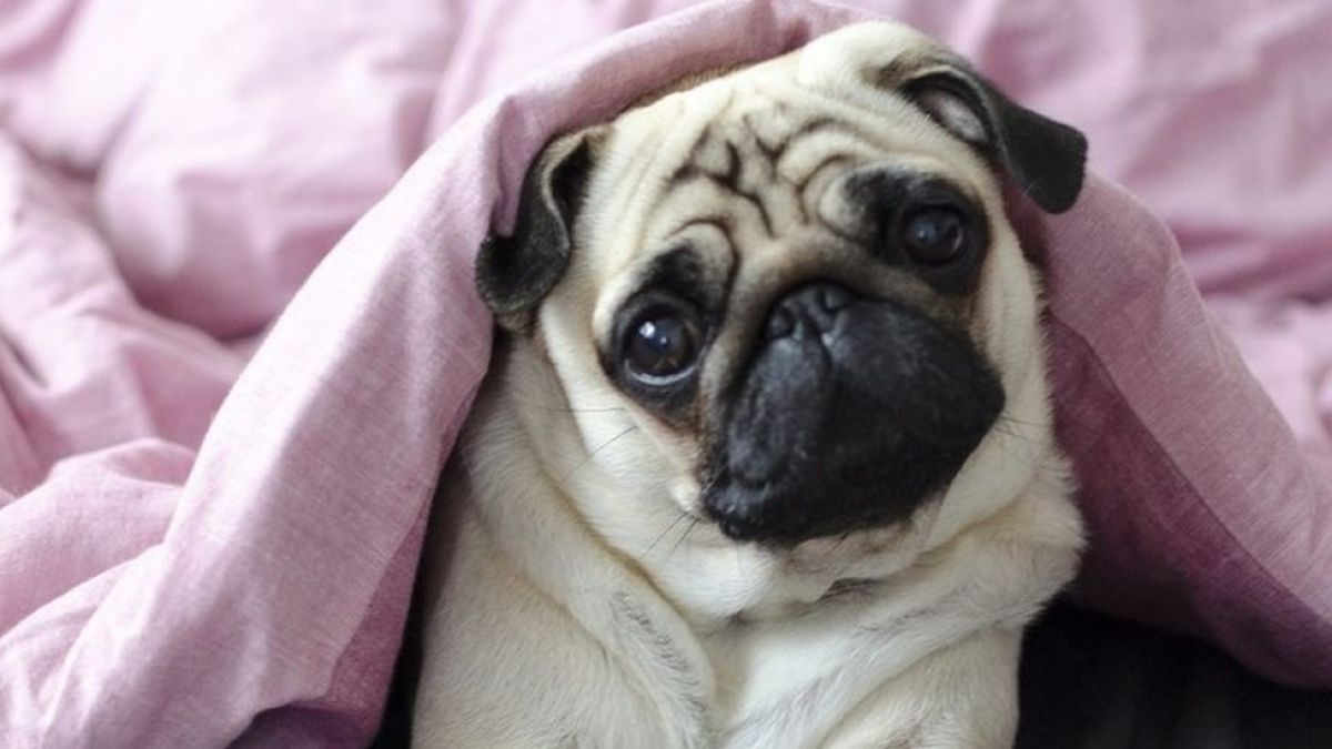 Día Mundial de los Animales: 10 razones por las que es bueno estar cerca de los animales