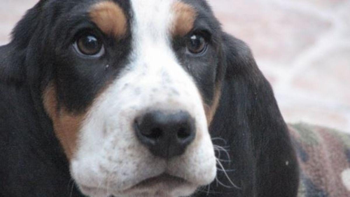 La historia de Baltazar, el perro perdido por el que ofrecen un auto BMW y un año de vodka