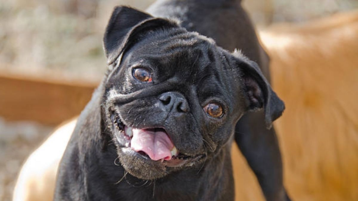 b9782f1ca7ed8 Hombre compra un perro por internet y recibe una rata negra