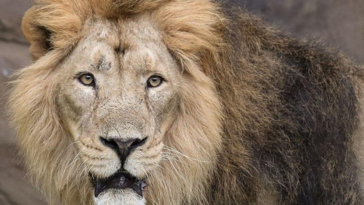 La tragedia de joven pasante de un zoológico asesinada por un león