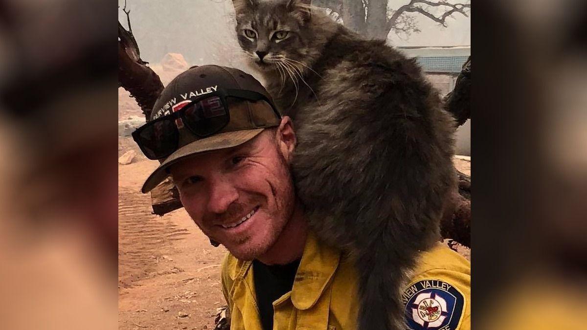 La historia del Gato que no se despega de bombero que lo salvó del incendio en California