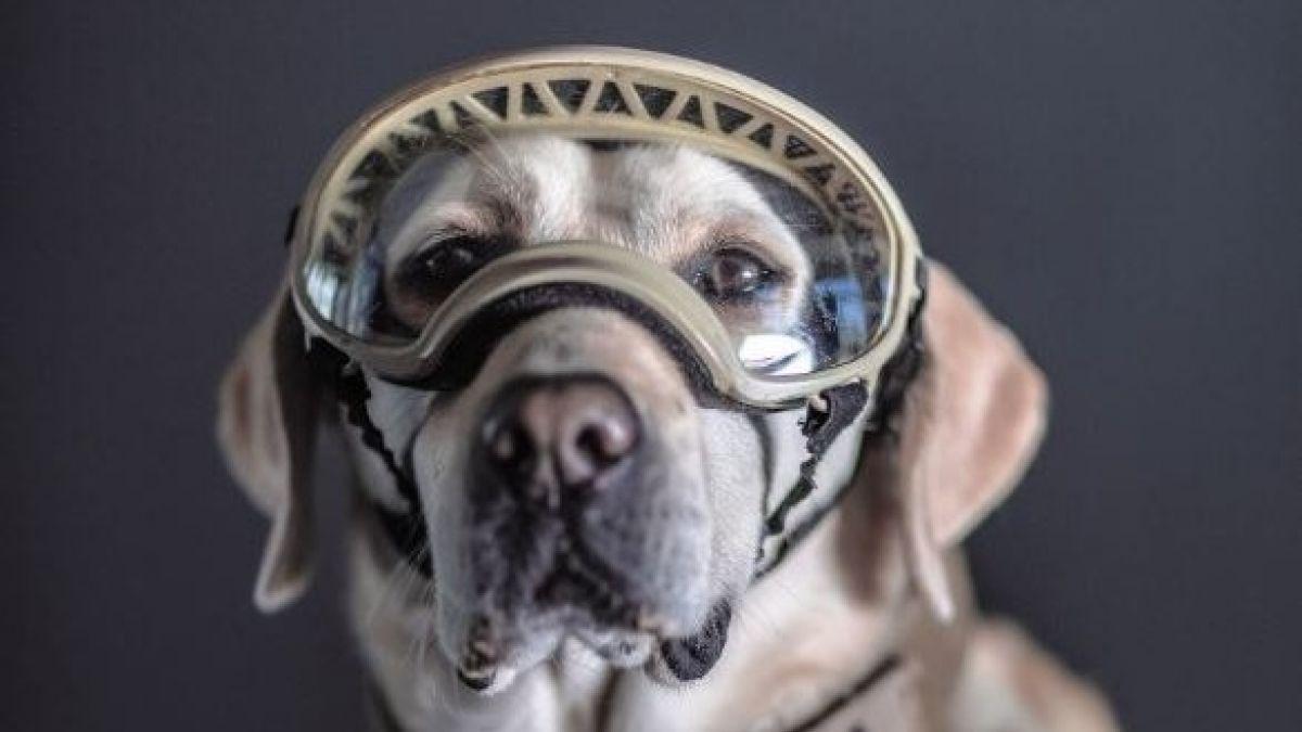 Frida y otros perros de México que se convirtieron en héroes por labores de rescate en terremotos