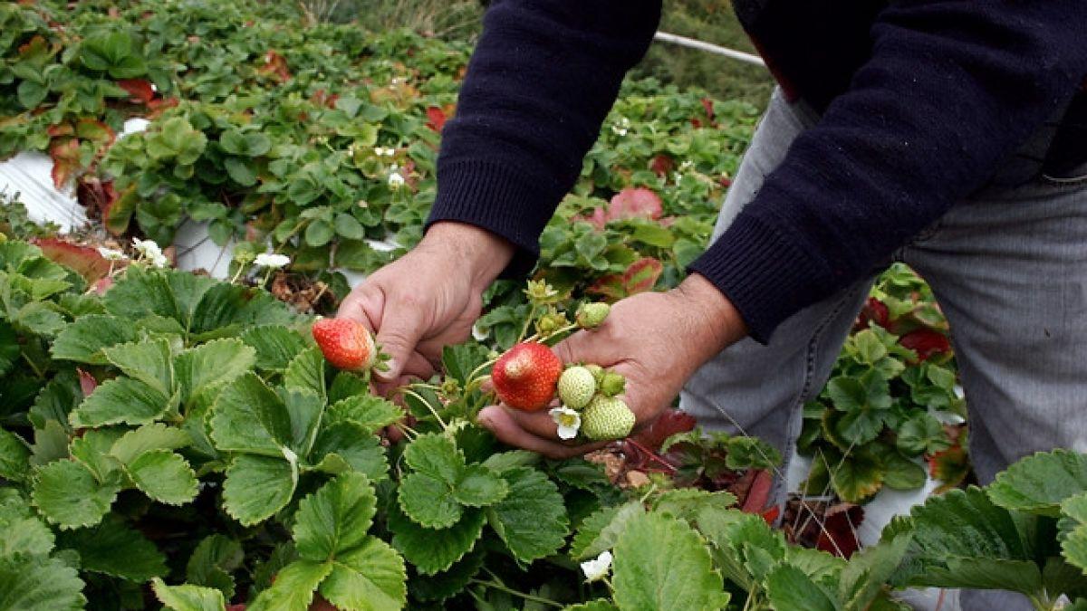 Gobierno decreta zona de emergencia agrícola en diez comunas de la Región de OHiggins