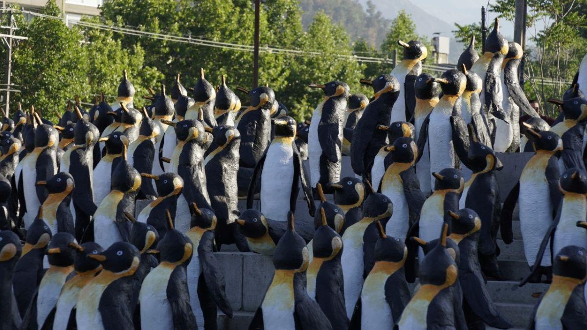 Por qué hay pingüinos en Plaza Italia