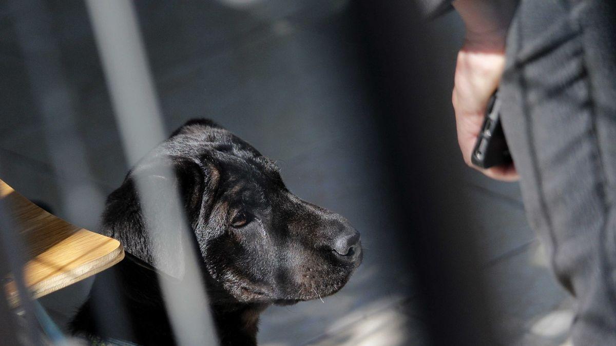 Mujer es arrestada por morder a una corredora que roció con spray pimienta a su perro