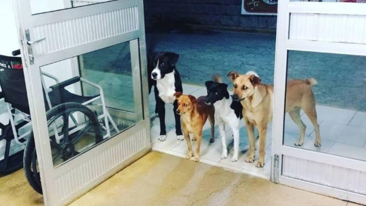 La enternecedora razón por la que cuatro perros esperaron horas en la entrada de un hospital