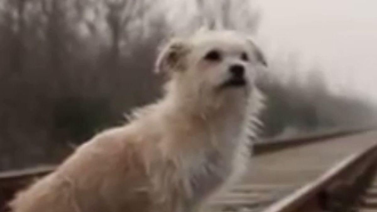 [VIDEO] La historia del perro que es una súper estrella televisiva y fue clonado en China