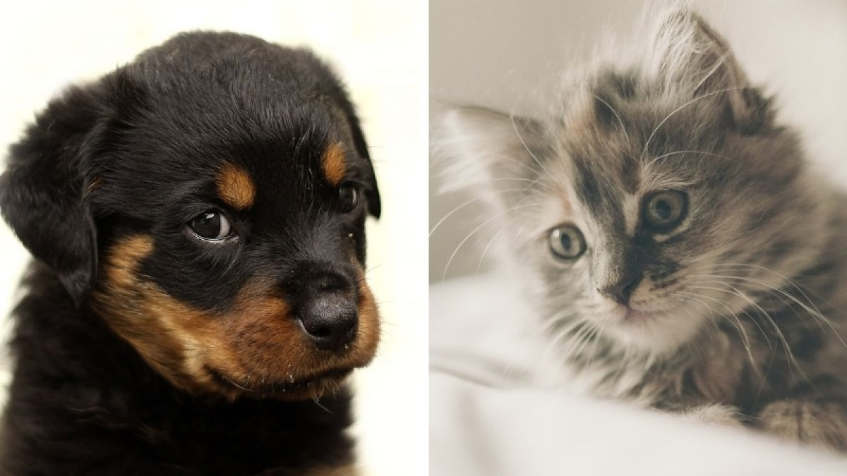 Gran Bretaña prohíbe venta de cachorros y gatitos en tiendas para animales