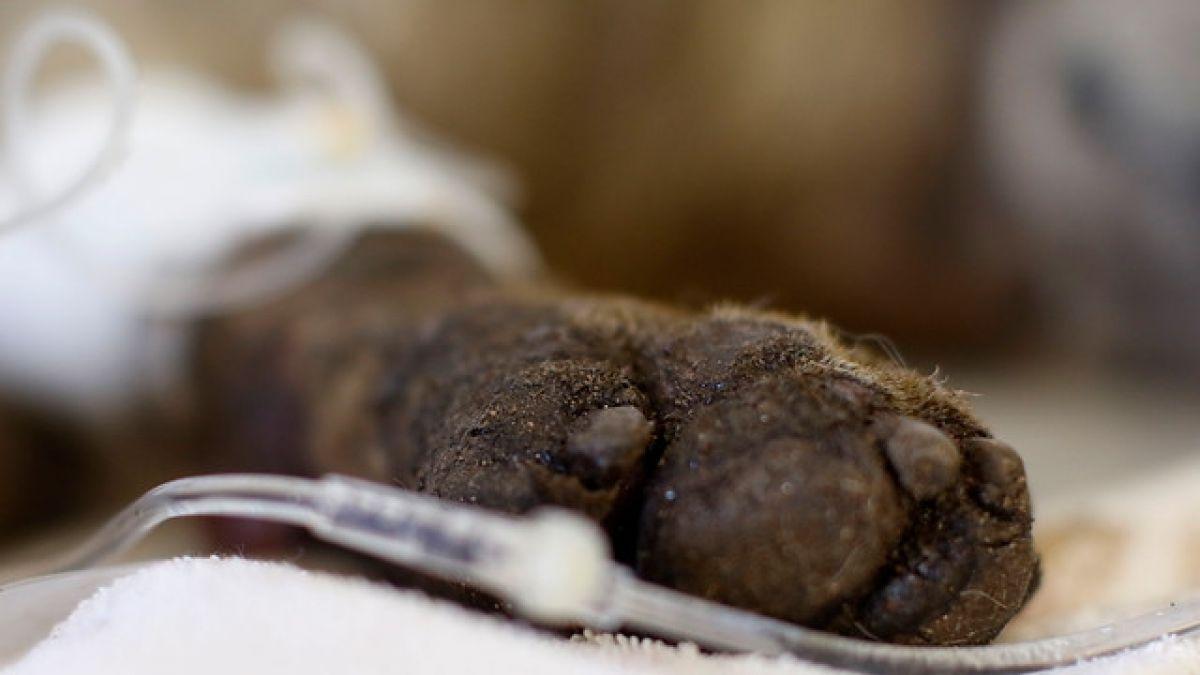 Estados Unidos: El homenaje al perro policía que murio en el tiroteo de Florida