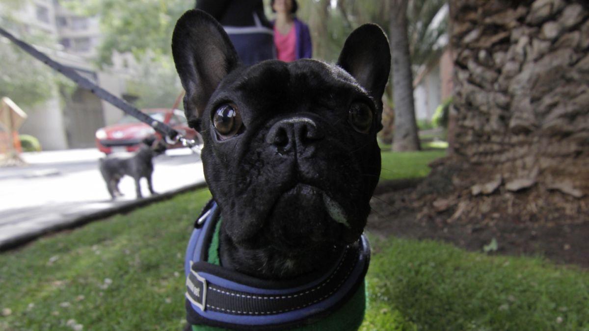 #MascotasT13: Experta entrega consejos para viajar con mascotas en vacaciones