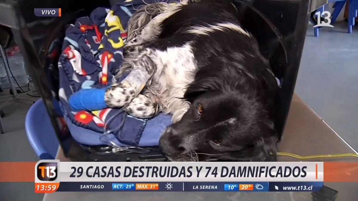 [VIDEO] Habilitan albergues para damnificados y mascotas en Limache