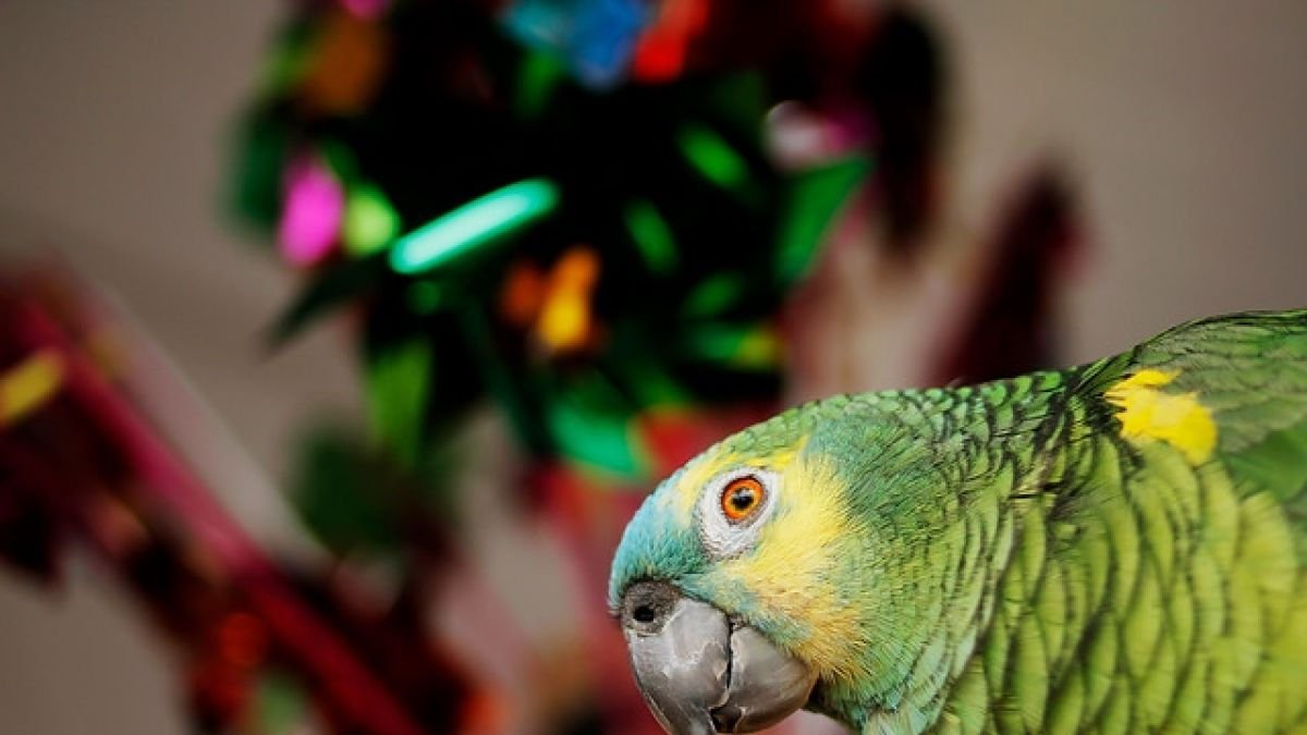 [VIDEO] Las cosas que debes considerar al adoptar a una mascota exótica