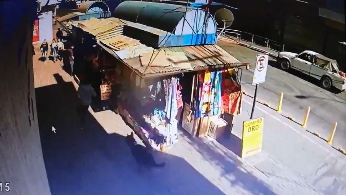 [VIDEO] El decidido actuar de un perro policial que capturó a un ladrón en Rancagua