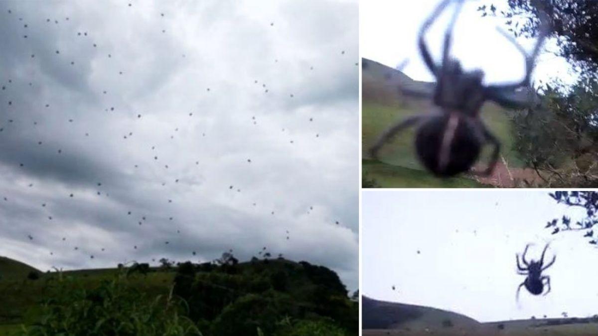 Impactantes imágenes de la lluvia de arañas en Brasil