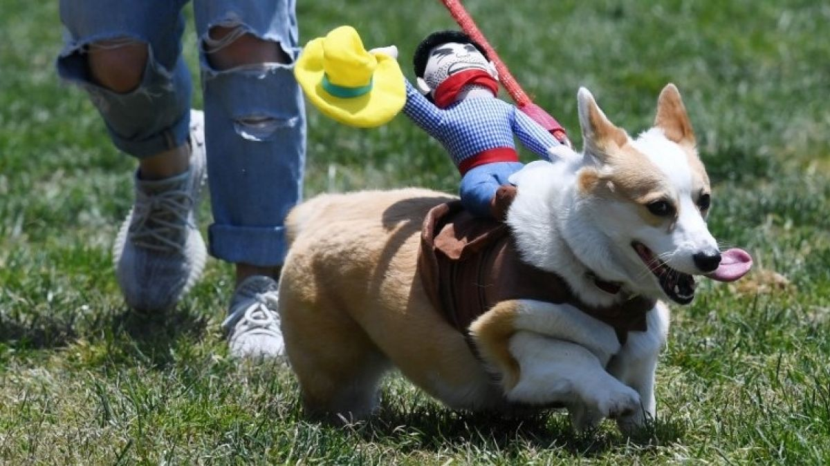 Uno de cada tres perros en Chile sufre de obesidad o sobrepeso