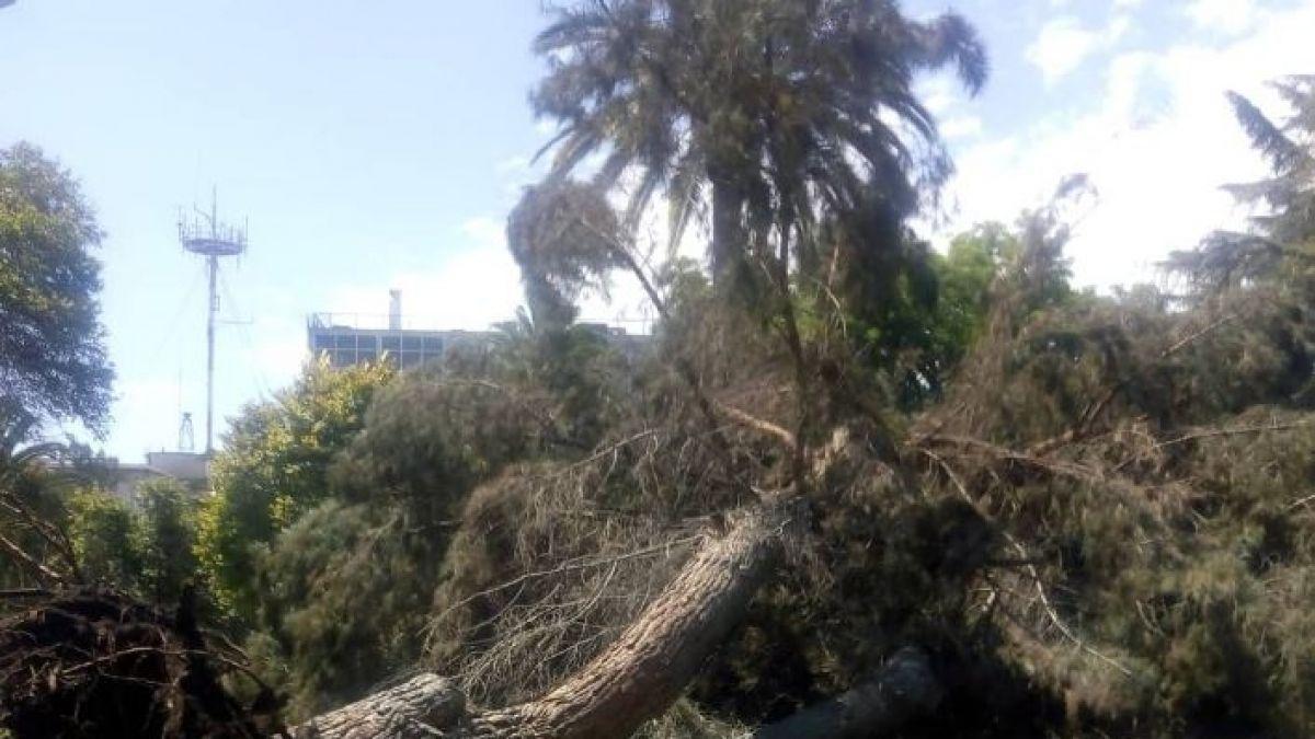 [VIDEO] Caída de árbol en Plaza Brasil deja una persona lesionada