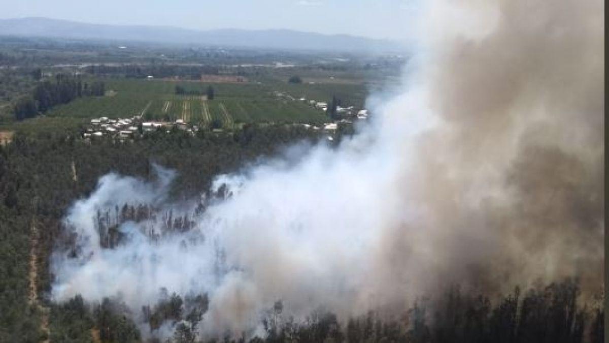 Incendio forestal en Curicó consumió cerca de 11 hectáreas