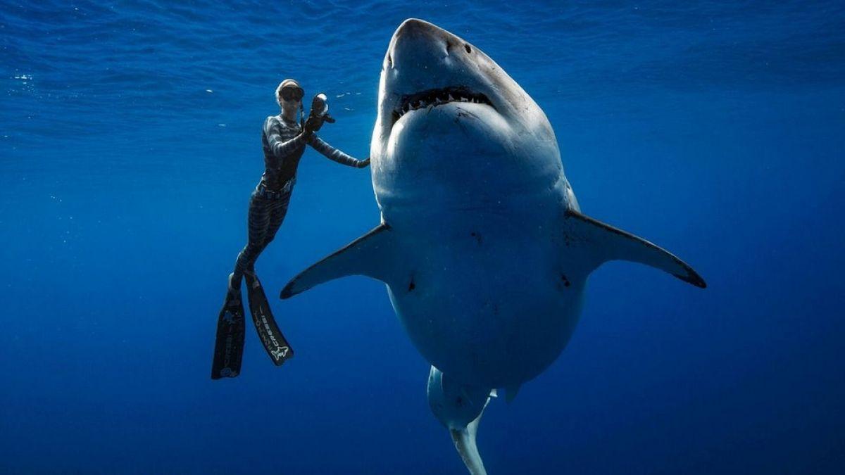 Las increíbles fotos de unos buzos nadando en Hawái con uno de los mayores tiburones blancos