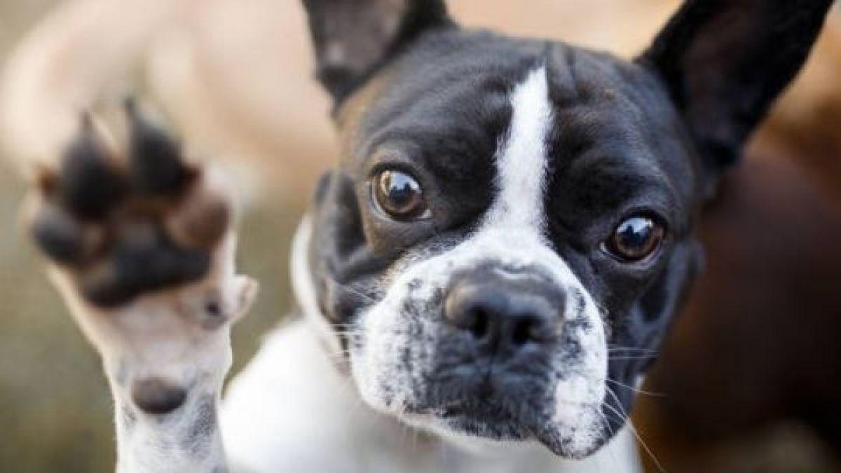 Insólito: municipio alemán incautó y vendió perro por deuda de sus dueños