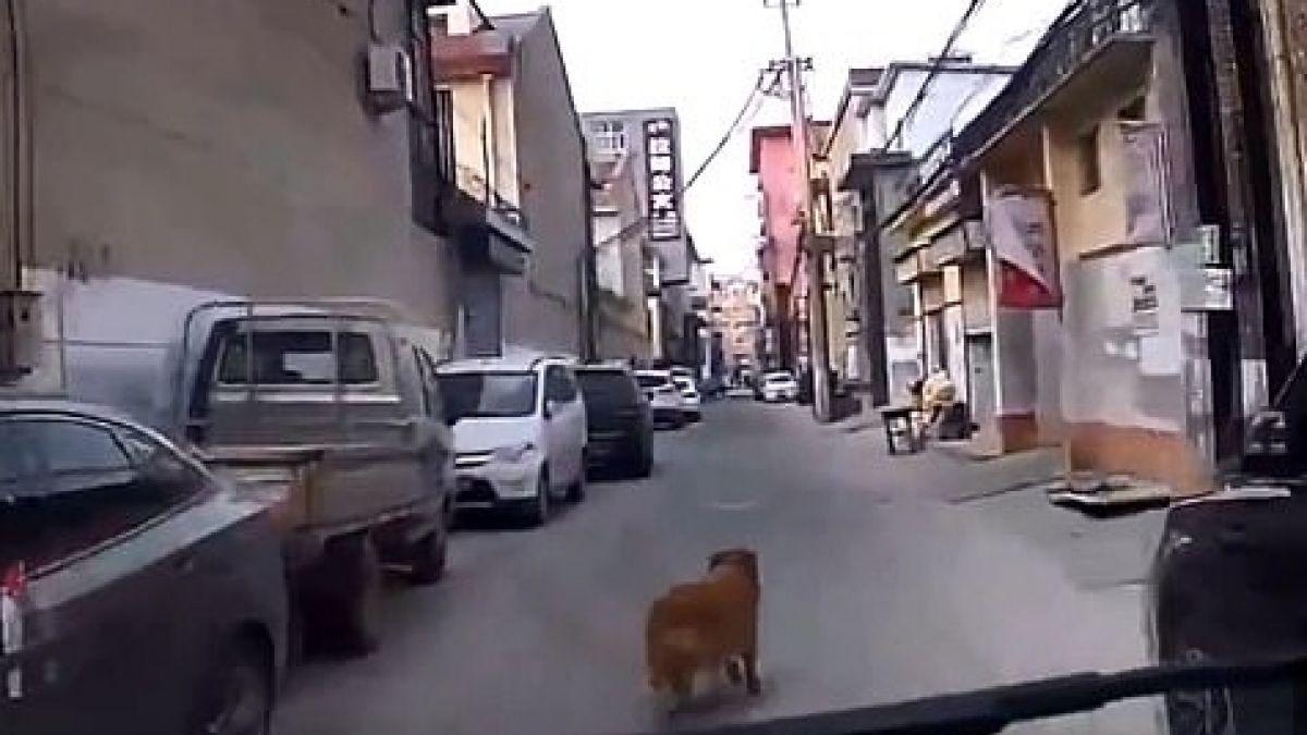 Perro guía ambulancia hasta su dueño y le salva la vida