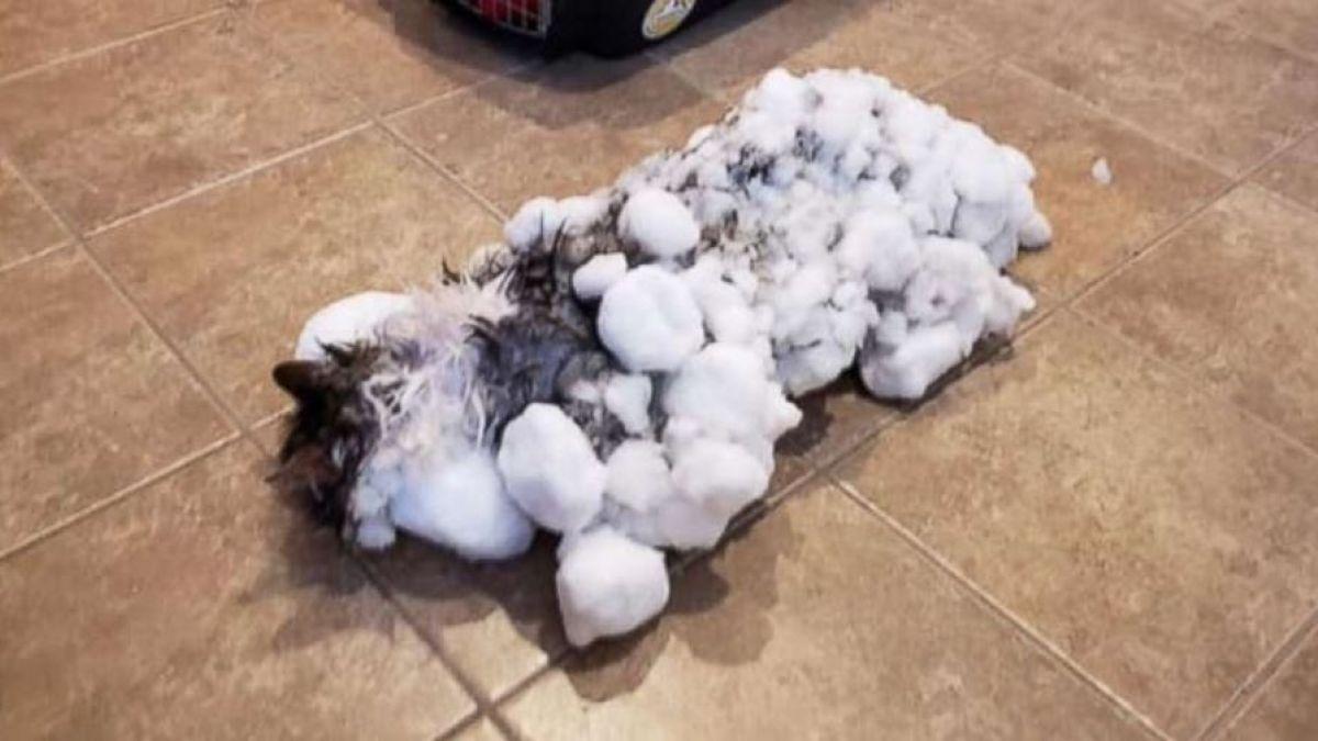 Sorprendente: Gato completamente congelado