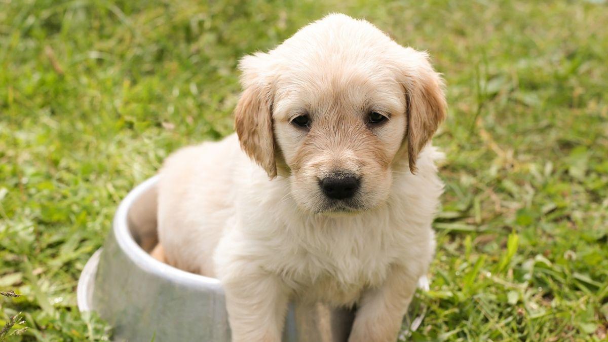"""Registro de mascotas: """"Más que marcha blanca, será marcha blanda"""""""